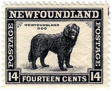 Newfoundland Dog Stamp