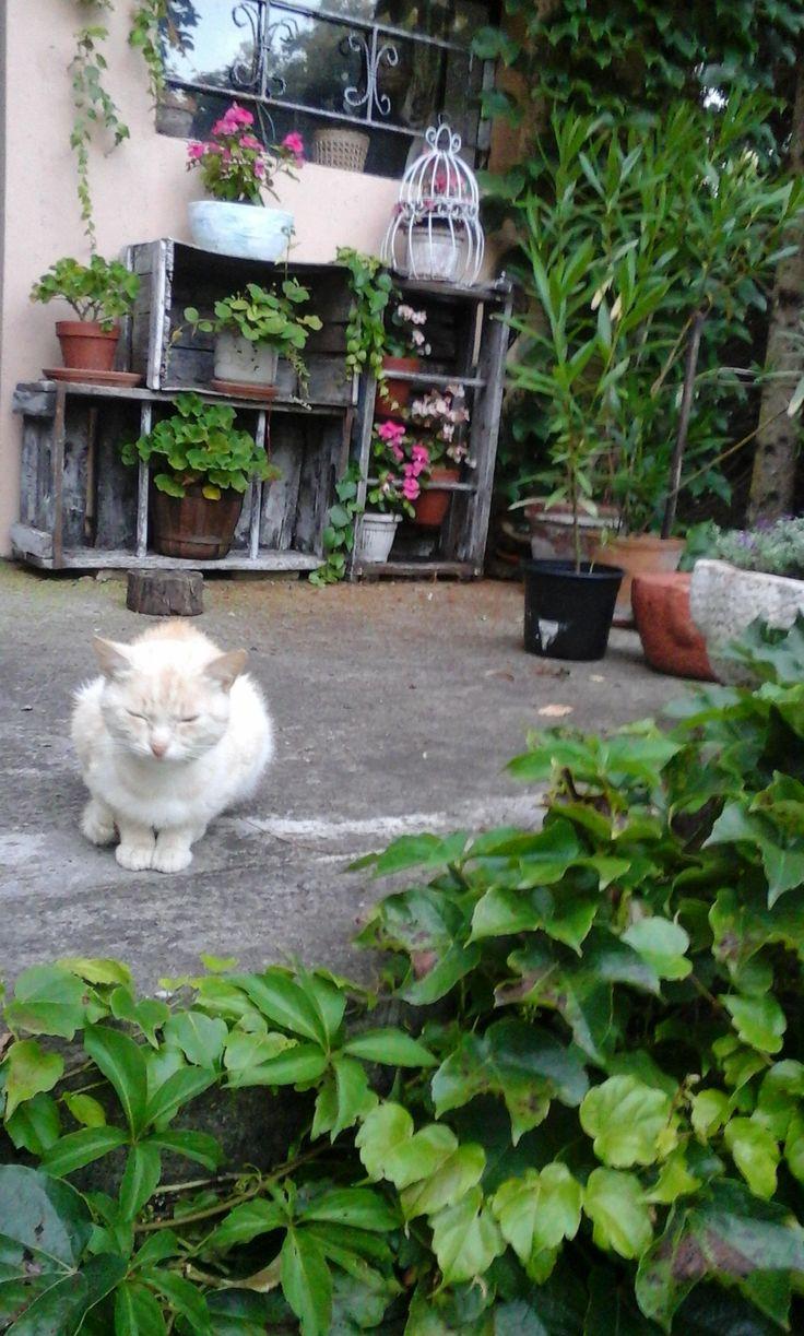 my cat - Marci