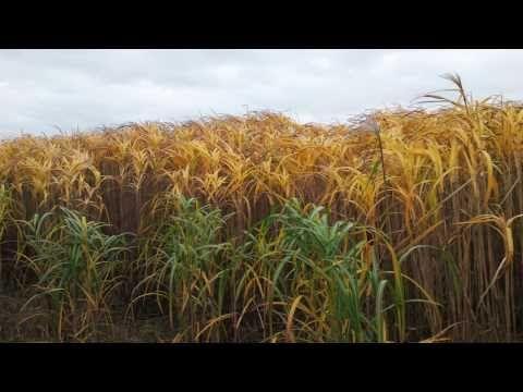 Biomass: an introduction - vnasean.com