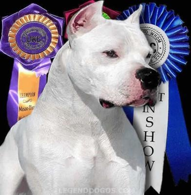 Dogo Argentino ,great family pets! I raise these, love them so much