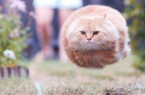 The rare and legendary feat of feline levitation