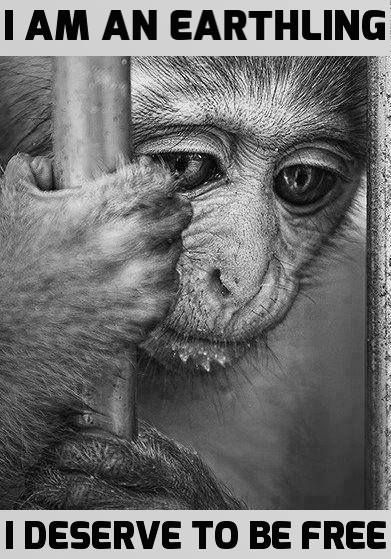 Humans have no more of a right to be on this planet than other animals.