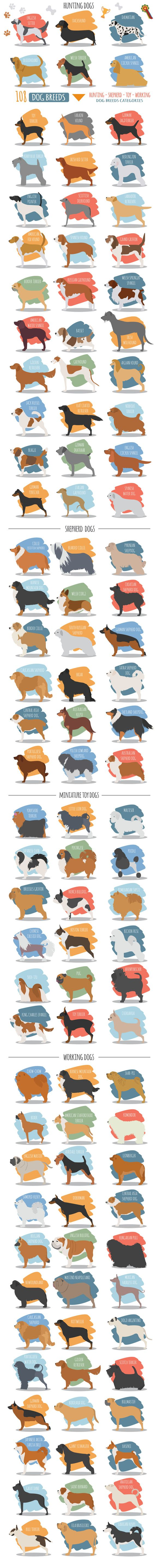 DOG breeds BIG set by design shop on @creativemarket