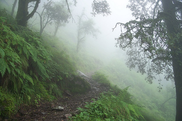 Rudranath Trek (through thick mist forest), Uttarakhand, India