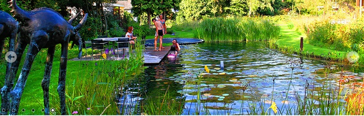 Lily Pond Natural Filtration Pool With A Built In Trampoline Diving Board