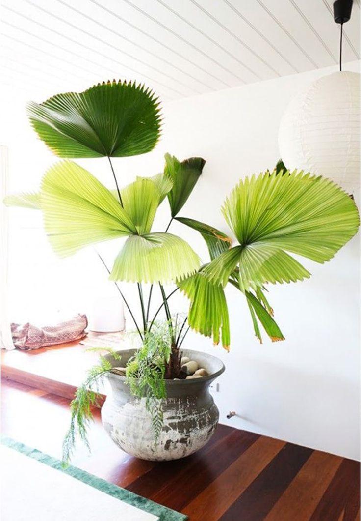 Grønne og hårdføre planter er dine bedste venner, når det gælder om at skabe havestue-stemning for få penge. Disse 7 skønheder er valgt af stylister og bloggere.