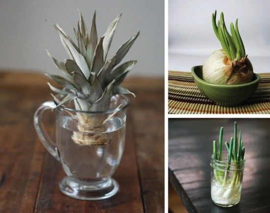 Regrow Food From Kitchen Scraps Like Magic | The WHOot