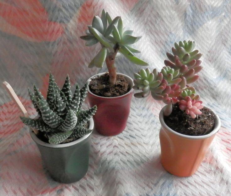 1000 images about succulentes succulent plante grasse cactus on pinterest coins planters. Black Bedroom Furniture Sets. Home Design Ideas