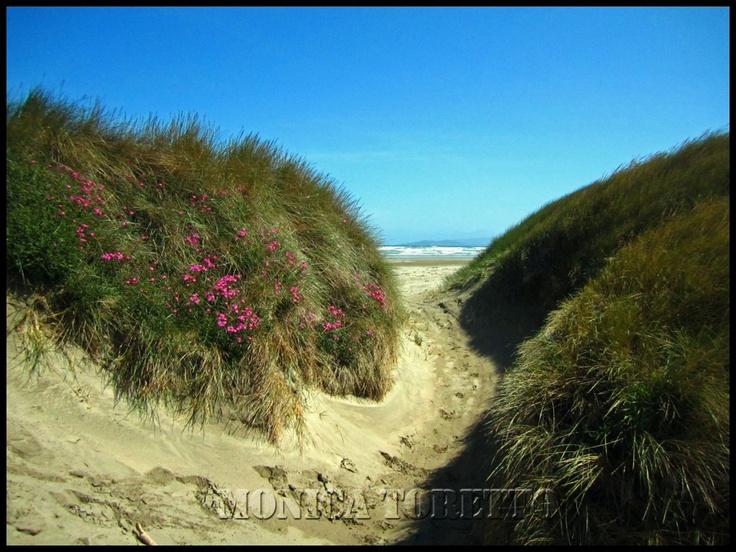 Oreti Beach - Invercargill, NZ