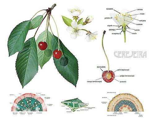 Ilustração Científica, Universidade de Aveiro   domínios