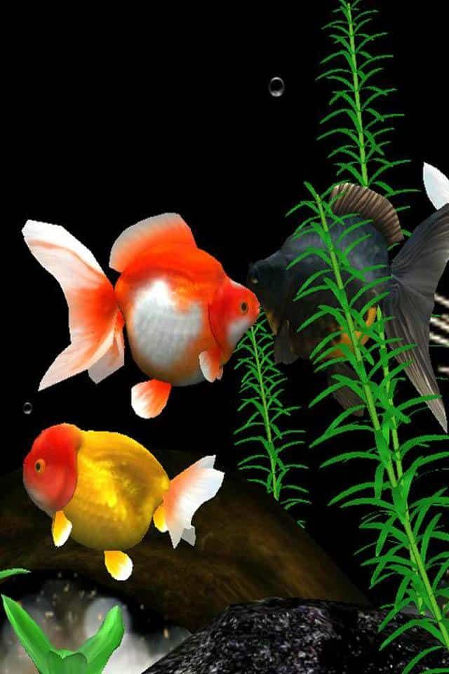 Http Mobw Org 20158 Moving Fish Wallpaper For Mobile Html Moving Fish Wallpaper For Mobile Fish Wallpaper Live Fish Wallpaper Fish