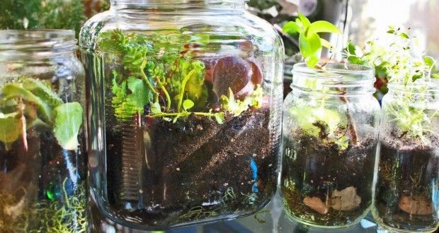 1000 Images About Edible Plants You Can Grow Indoors On 400 x 300