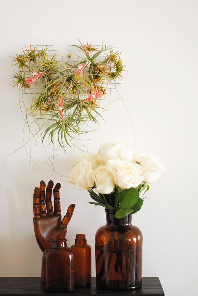 rote tillandsien behälter muscheln rund vasen