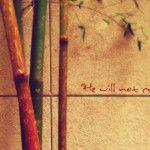 Weakest reed