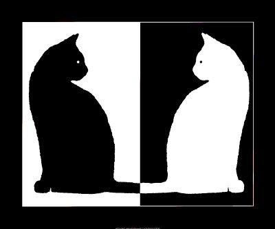 chats noirs et blancs                                                                                                                                                      Plus
