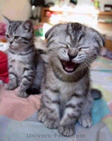 Photo drole de chat - Un très grand classique bien marrante ^_^