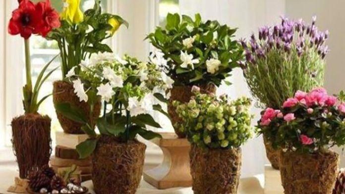 Většina z nás se ráda obklopuje pokojovými rostlinami. Je to kousek přírody v našich domovech. Většina z nich je nenáročná, ale i přesto se o ně musíme patřičně starat, aby nám mohly dál dělat radost. Dnes Vám ukážeme pár užitečných tipů, jak rostlinky udržet v plném rozkvětu díky surovinám, které …
