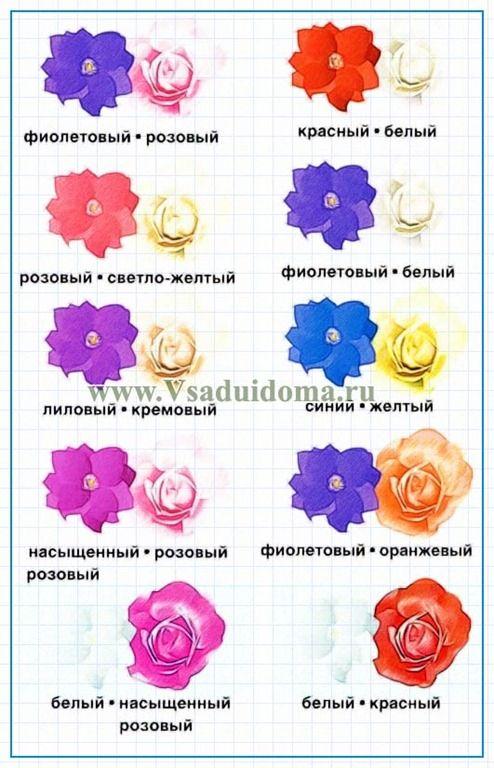 Клематисы и розы: фото, совместное выращивание и уход за ...