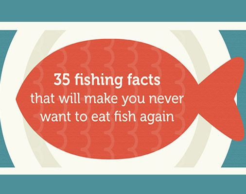 326 best images about how to catch more fish on pinterest for Facts about fishing