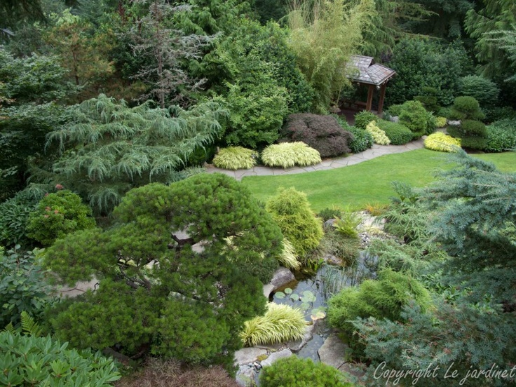 151 best images about conifer companions on pinterest gardens fall plants and perennials. Black Bedroom Furniture Sets. Home Design Ideas