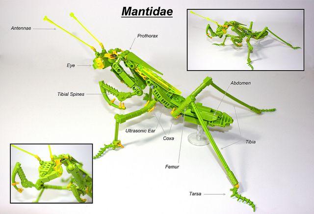 praying mantis (mantidae) lego insect anatomy diagram: via ... praying mantis body parts diagram