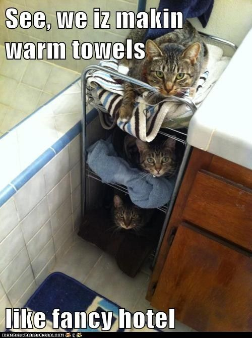 funny cat pictures - Lolcats: See, we iz makin warm towels: Kitty Cat, Funny Pictures, Funny Cat, Fancy Hotels, Warm Towels, Cat Tree, Towels Warmers, Master Bathroom, Cat Lady