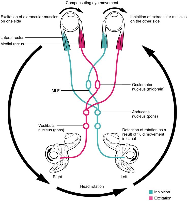 16 best visual processing anatomy images on pinterest