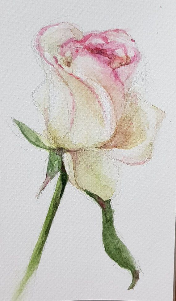 Fiori Watercolor.Rose Original Watercolor Painting Dipinti Floreali Dipingere