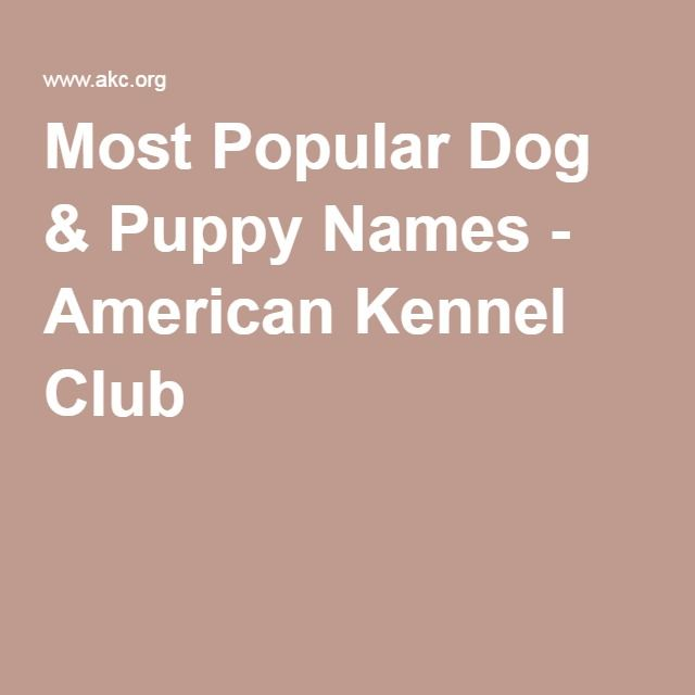 Most Popular Dog Puppy Names
