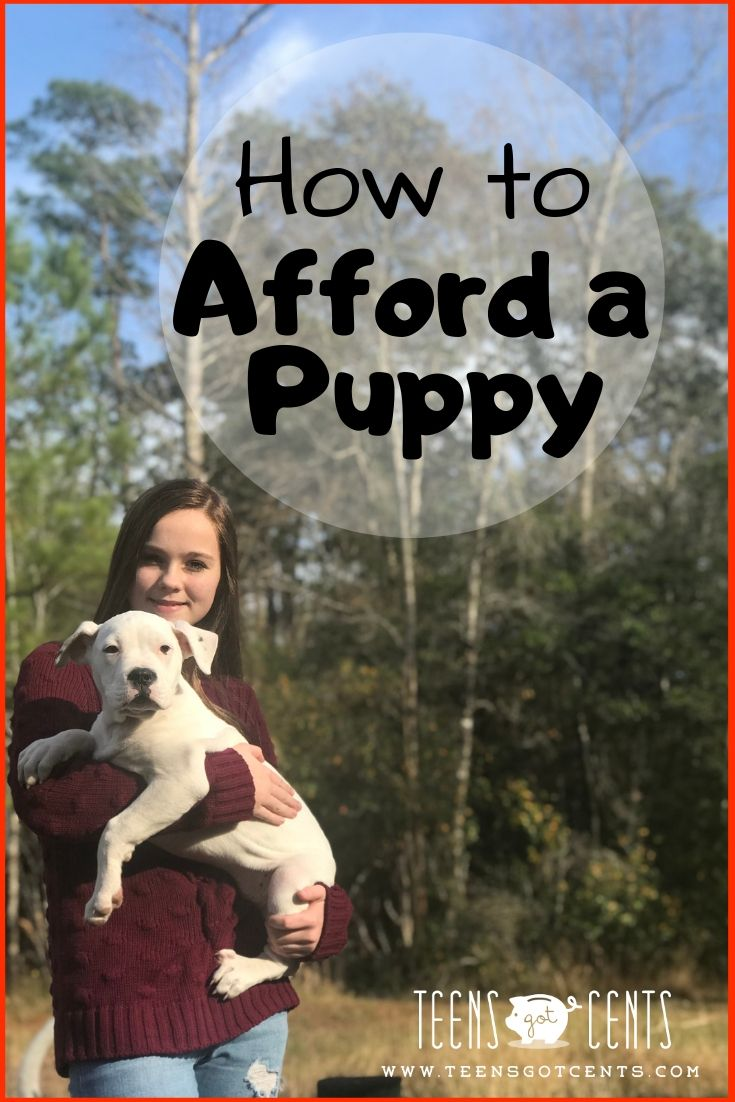 How To Afford A Puppy Puppies Dog Training Near Me Getting A Puppy