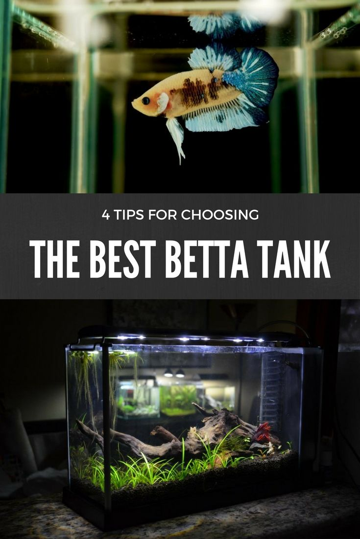 152 best betta fish tanks images on pinterest fish for Best betta fish tank