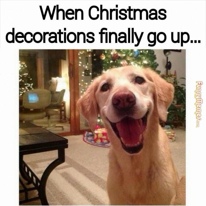 12 signs youre a christmas addict comedy pinterest funny funny pictures and funny animals - Christmas Decorating Meme