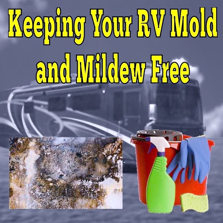 RV Tips for Keeping Your RV Mold and Mildew Free                                                                                                                                                     More