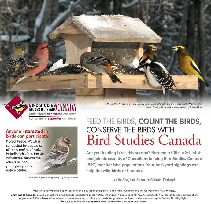Research & Studies : Birds.com: Online Birds Guide with ...