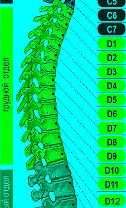 Симптомы и состояния, для обращения в Инвента Ортопро: травмы позвоночника, плоскостопие, боли в суставах и спине, грыжа, протрузии, сколиоз,артрит, артроз