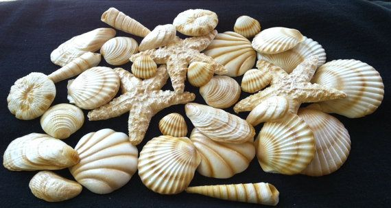20 Piece Edible Gum Paste Seashells by SweetEdibles on Etsy, $33.00