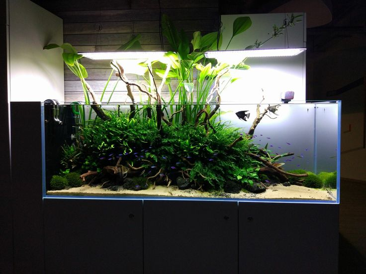 Nature aquarium  www.ibrio.it your aquarium born here ! il tuo acquario nasce qui ! https://www.facebook.com/ibrio.it #ibrio #acquario #acquari #acquariologia #acquariofilia #aquarium #aquariums #piante #natura #pesci #zen #design #arredamento #layout #layouts #layoutdesign #roccia #roccie  #moss #freshwater #plantedtank #aquadesignamano #tropicalfish #fishofinstagram #aquaticplants #natureaquarium #nanotank #reefkeeper #nanoreef #saltwateraquarium