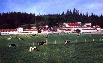 CARNATION FARMS:  Founded in the Seattle, WA area in 1910.  Dairy herd has been dispersed.