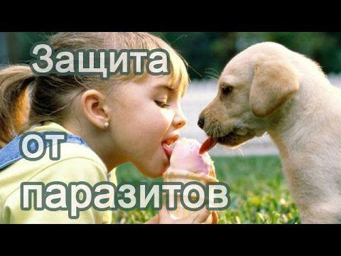 Средство защиты и профилактики детей от паразитов, заболеваний двенадцат...