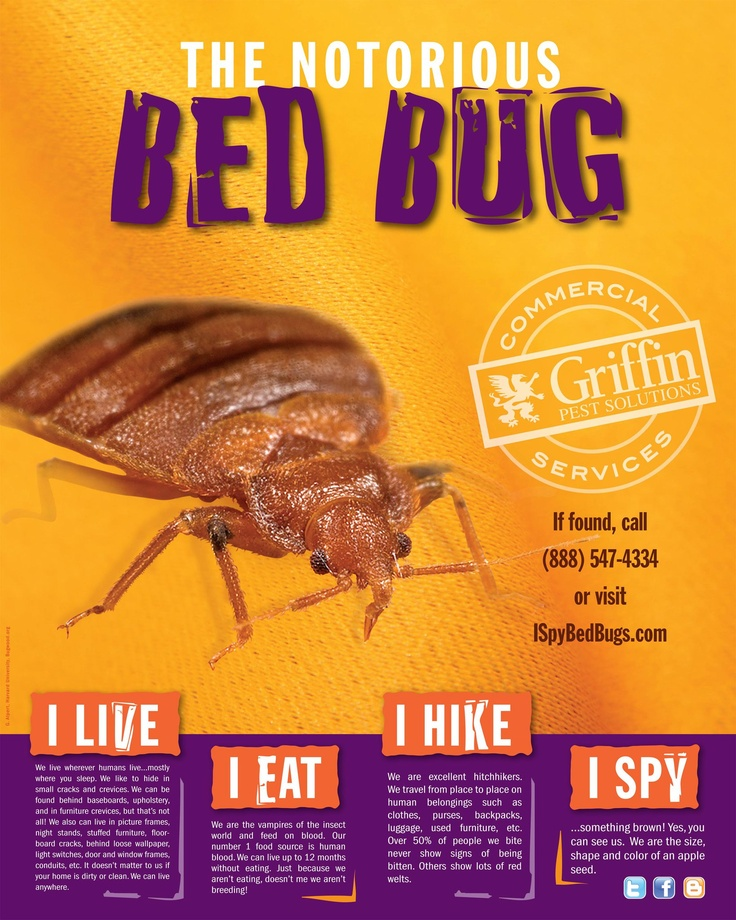 Bed bugs are nasty. Our poster has some great info on what