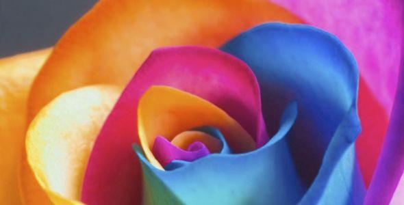 Farger påvirker humøret! - Tjæralin AS