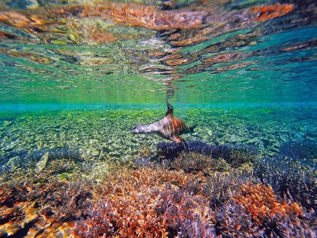The Abrolhos Islands are one of Western Australia's unique marine environments. The islands lie about 60km west of Geraldton, and are home to humans during the crayfishing season. Picture: Steve Fraser.