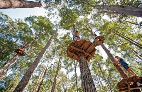 Kids Activities Sydney treetopadventure park