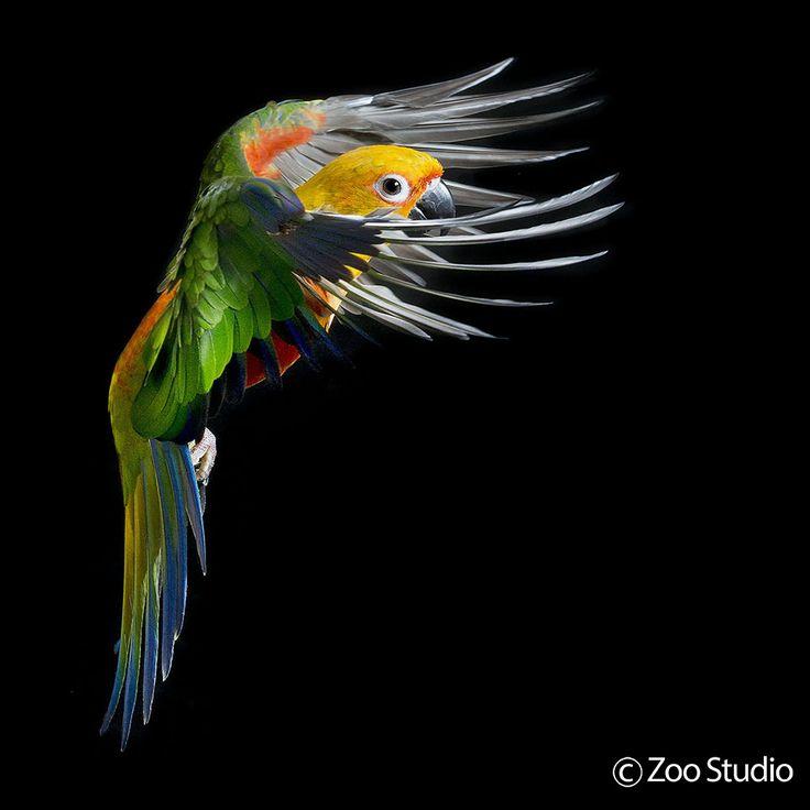 Parrot 105 105 best Pets -...