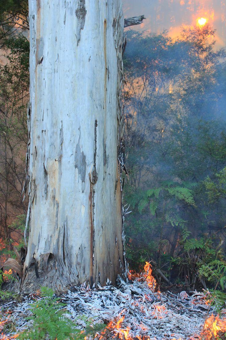 Autumn Burn @ Marima - Karri Forest