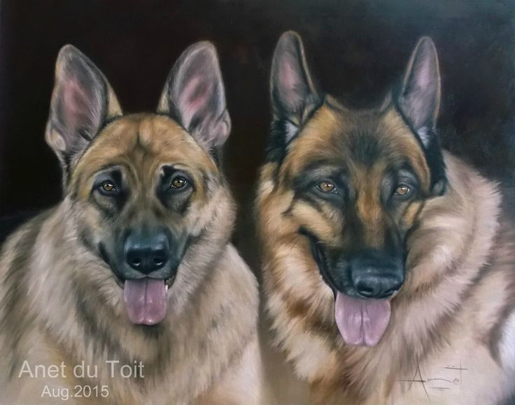 Bronco & Gabby Oil on canvas 70cm x 55cm Commissioned / SOLD