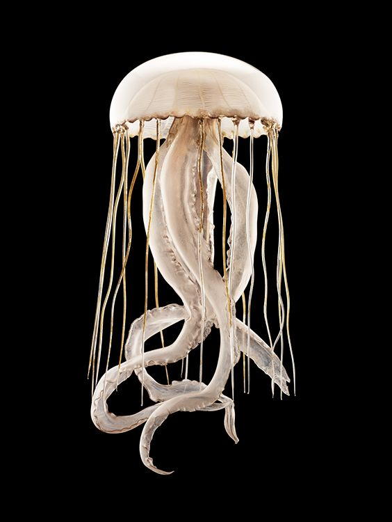Italian still life photographer, Guido Mocafico's fascination with Leopold and his son Rudolf Blaschka's glass models of marine invertebrates and plan...