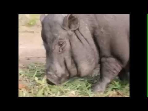 Выездной зоопарк |  8(965)380-13-11