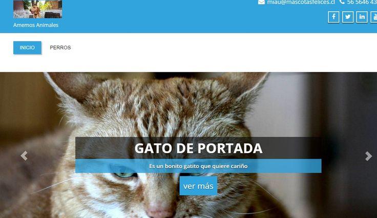 Sitio de animales proyecto link----> http://www.nicosanmartin.cl/wordpress/