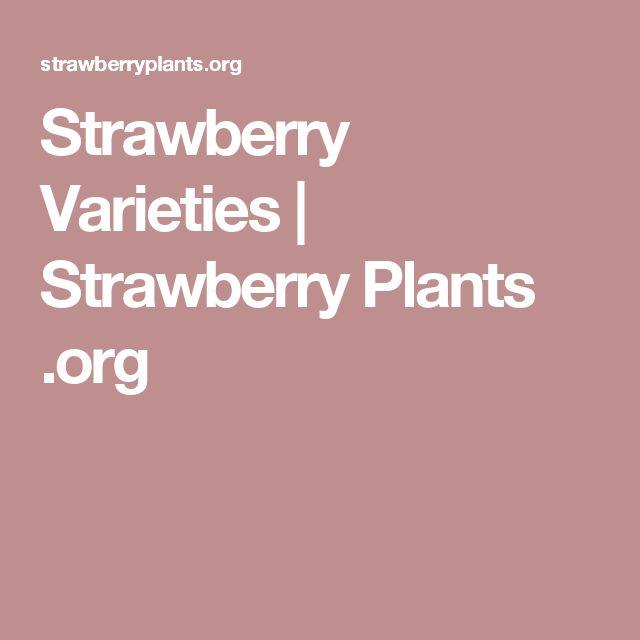 Strawberry Varieties   Strawberry Plants .org